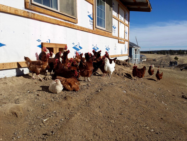 Colorado Springs, Denver, farm, fresh, chickens, eggs, milk, organic, Rocky Mountain Food Report, news