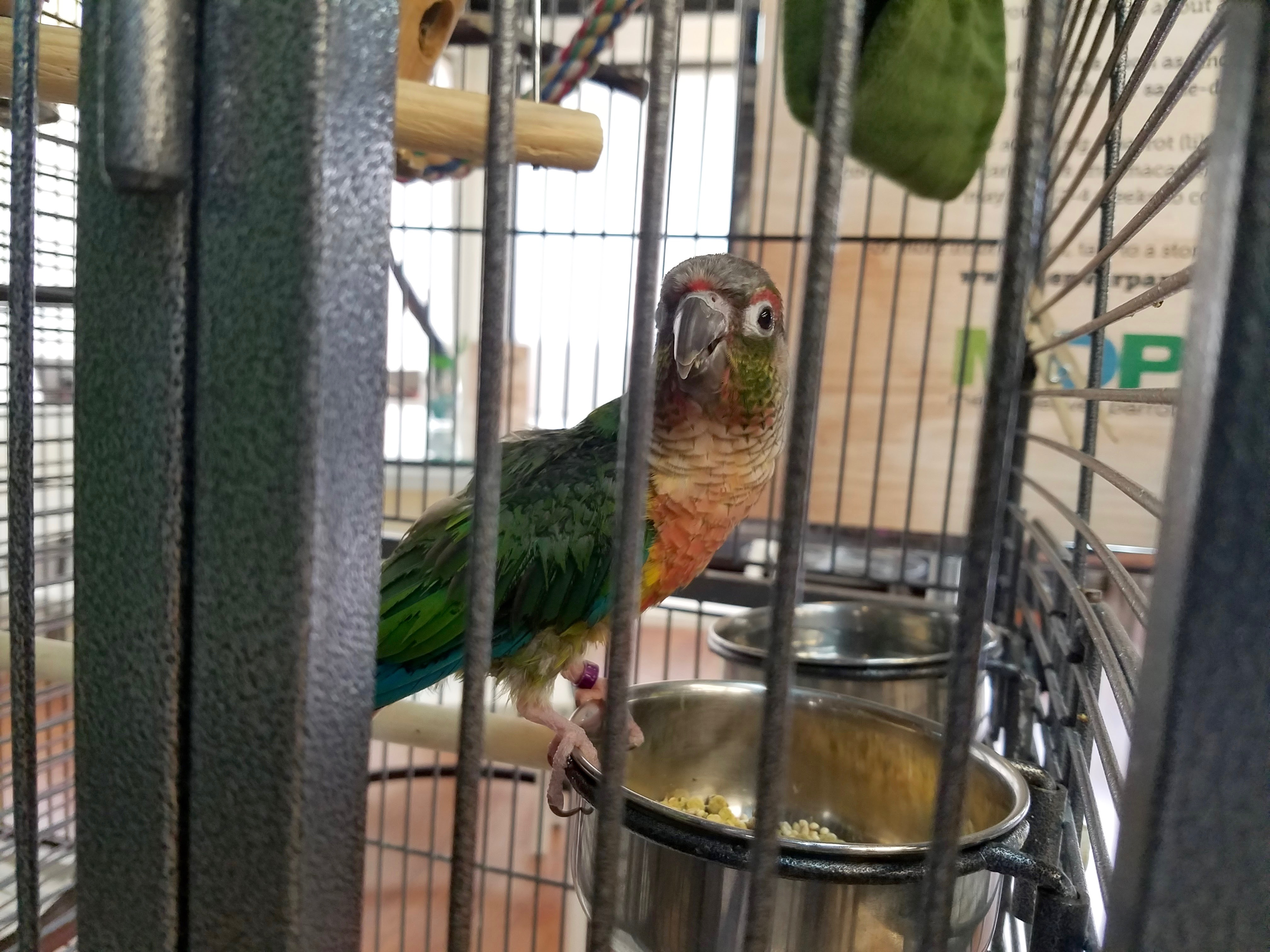 A peek at Ivywild's parrot cafe, The Perch | RMFR